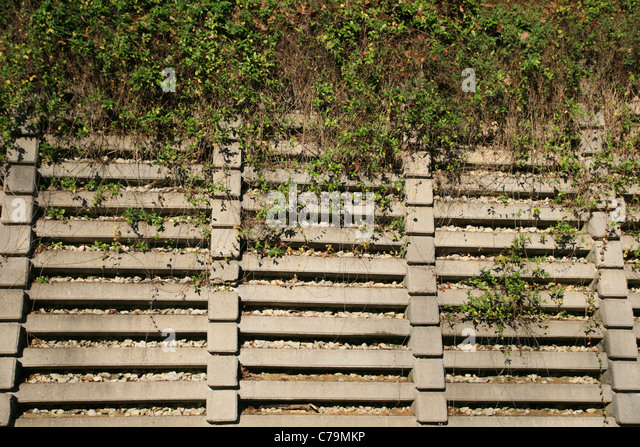 Vines Wall Stock Photos Amp Vines Wall Stock Images Alamy