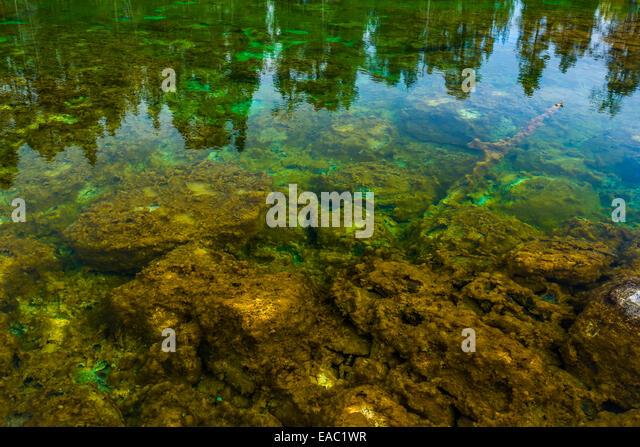 Algae bikini pond string