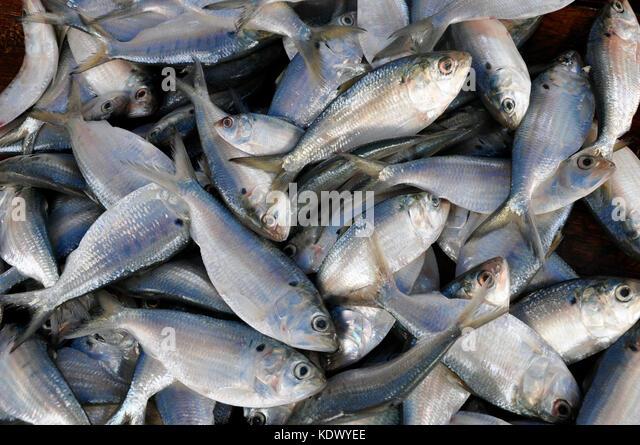 Galle Sri Lanka Market Stock Photos Galle Sri Lanka