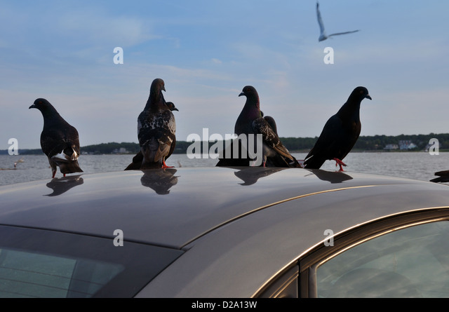 how to stop pigeons sitting on roof