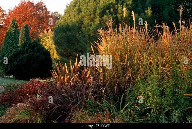 Autumn garden border stock photos autumn garden border for Tall border grass
