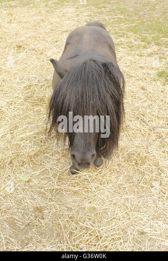 long manes stock photos - photo #13