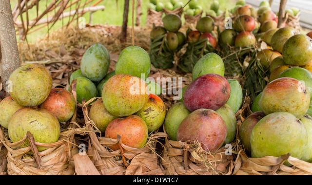 mango fruit fruit stand