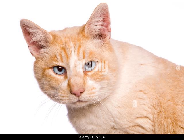 grumpy cat product