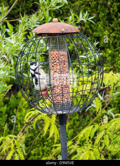 Birds Are Eating Food Off Cage Bottom