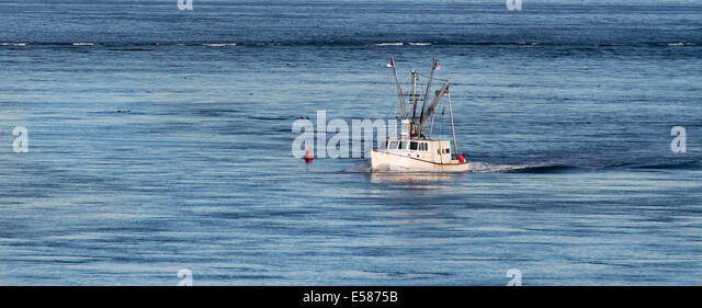 Cod fishing atlantic stock photos cod fishing atlantic for Mass commercial fishing