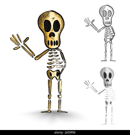 Human Skeletons Stock Photos & Human Skeletons Stock Images - Alamy