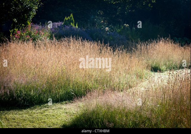 Unmown lawn stock photos unmown lawn stock images alamy for Wild grass landscaping