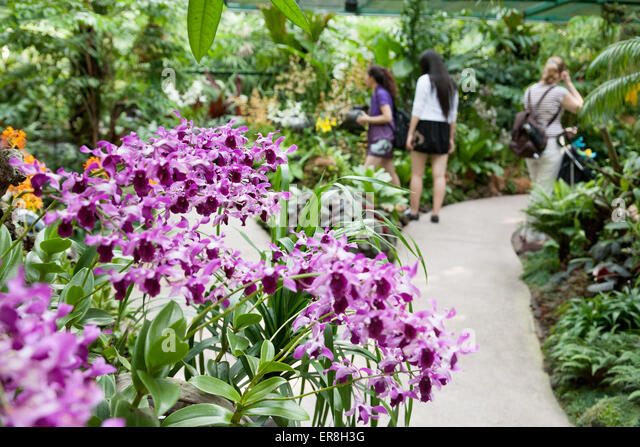 Awesome People Looking At The Orchids, National Orchid Garden, Singapore Botanic  Gardens, Singapore South