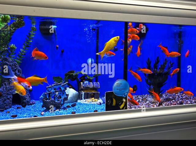 Aquarium store stock photos aquarium store stock images for Aquarium shop