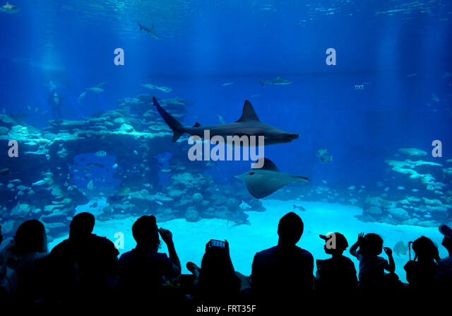 Visitors in the Shark Pool of Coral World Underwater Observatory ...