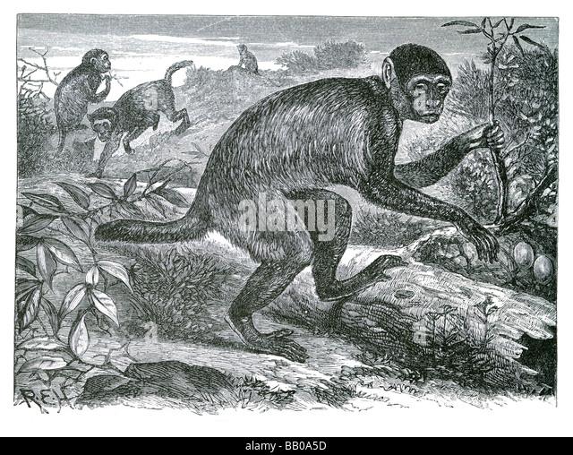 Taxonomy - Pitheciidae (FAMILY) - uniprot.org