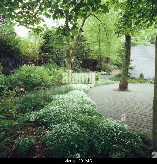 Planting Under Deciduous Trees : Pink white flowers underneath beneath a tree underplanting garden