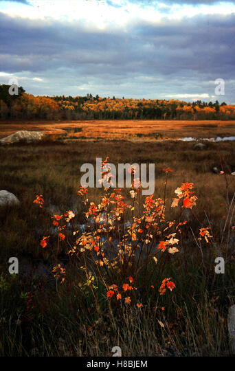 indian summer in maine stock photos indian summer in maine stock images alamy. Black Bedroom Furniture Sets. Home Design Ideas
