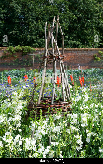 Plant Frame, Support Structure In Walled Garden   Stock Image