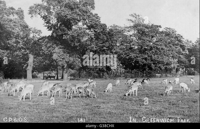 Deer park dating