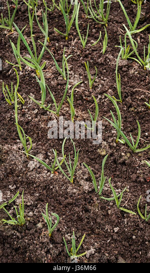 Friable soil stock photos friable soil stock images alamy for Garden soil definition