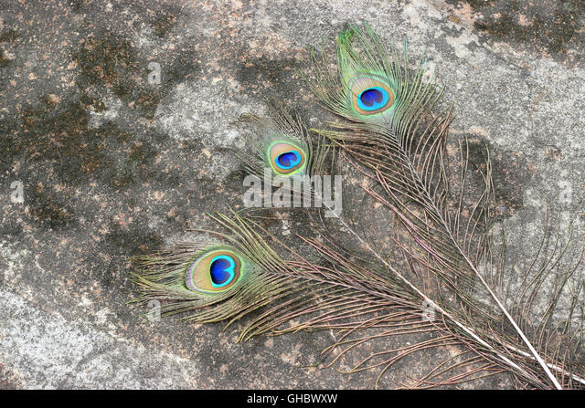 Feather Abstract Stock Photos & Feather Abstract Stock ...