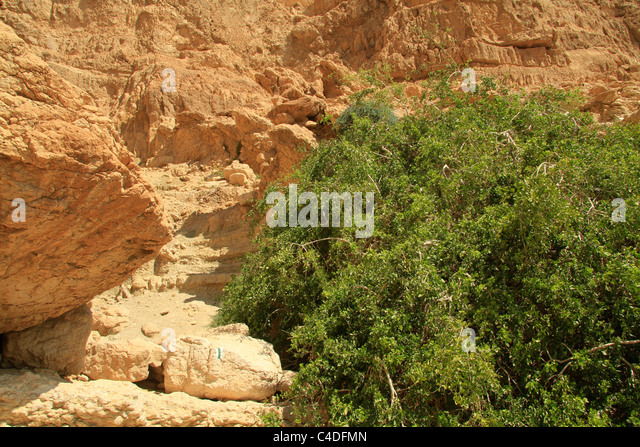 Mustard Tree Stock Photos & Mustard Tree Stock Images - Alamy