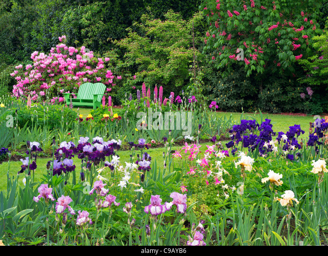 Attractive Iris And Other Flowering Plants With Chair At Schriners Iris Garden. Oregon    Stock Image