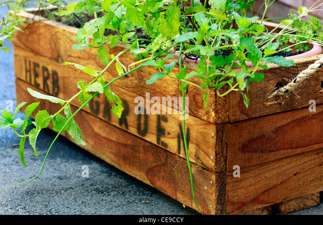 Flowers Gardens amp Plants Stock Photos amp Images Flowers  : herb garden rustic wooden crate for potted herbs ce9ccy from alamy.com size 640 x 446 jpeg 147kB