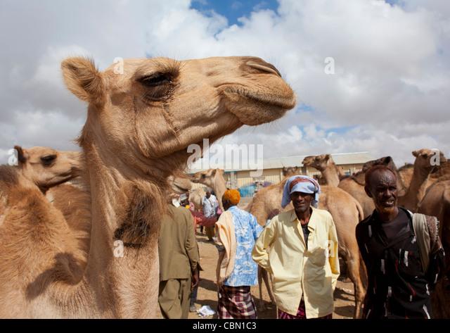 Somaliland Hargeysa Stock Photos &amp- Somaliland Hargeysa Stock ...