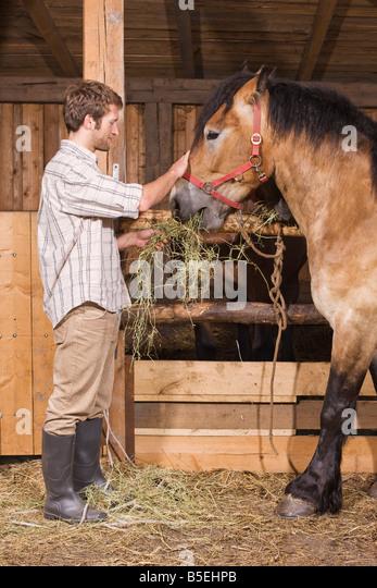 Horses For Sale Long Island Ny