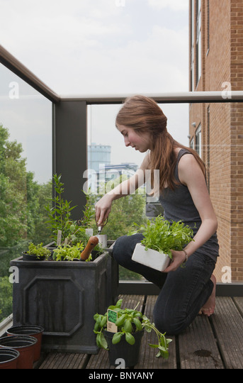 Young Woman Gardening On Balcony   Stock Image
