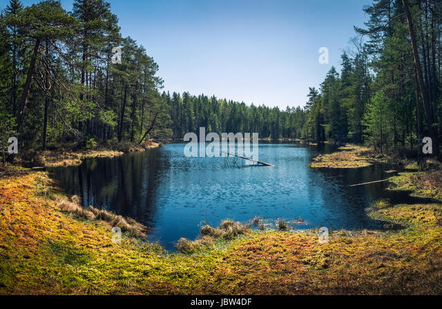 Lush swamp at bright summer day - Stock Image
