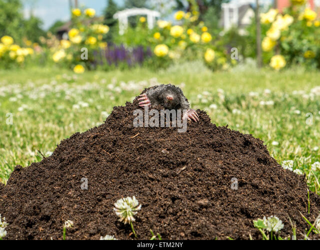 Mound of garden soil stock photos mound of garden soil for Mounding grass