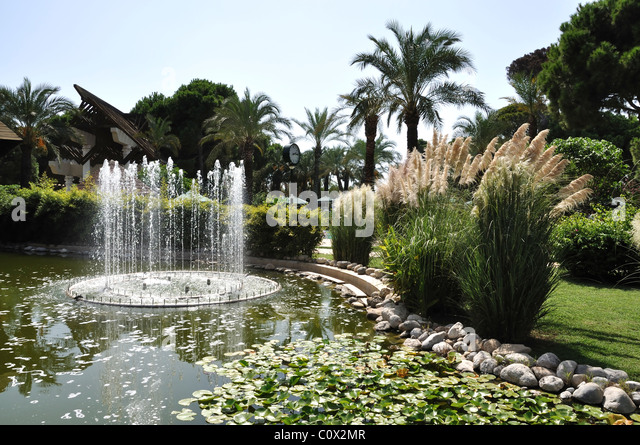 Palm Lily Stock Photos Palm Lily Stock Images Alamy