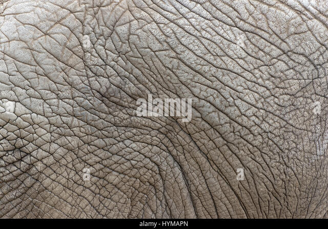 Animal Skin Texture Stock Photos & Animal Skin Texture ...