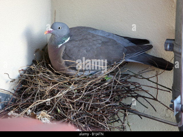 how to make pigeon nest fronts