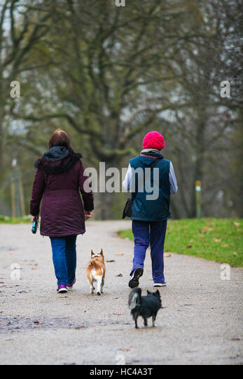 Finsbury Park Dog Walking