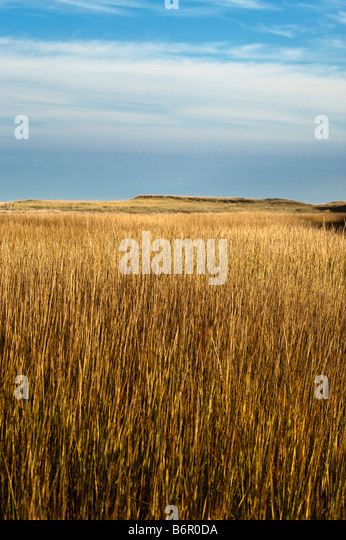 Marsh grass cape cod stock photos marsh grass cape cod for Seagrass for landscaping
