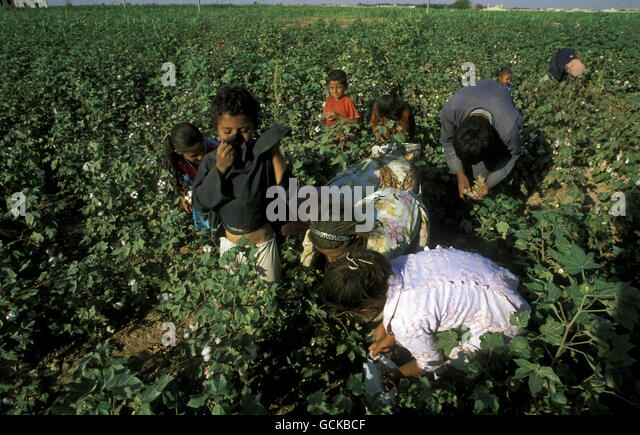 plantation slavery in the middle east Nepali slaves in the middle east the guardian  unscrupulous agents take huge sums of money from them for work abroad then consign them to slavery and appalling conditions in the middle east .