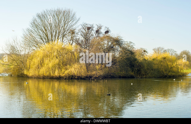 heron-nesting-area-on-an-island-in-the-p