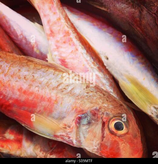 Surmullet stock photos surmullet stock images alamy for Red mullet fish