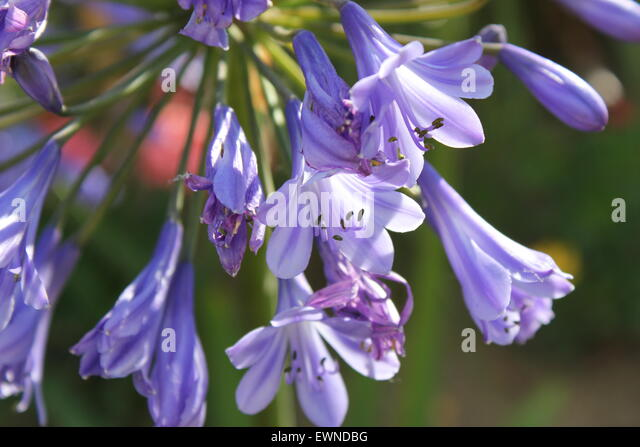 Drooping Flowers Stock Photos Amp Drooping Flowers Stock Images Alamy