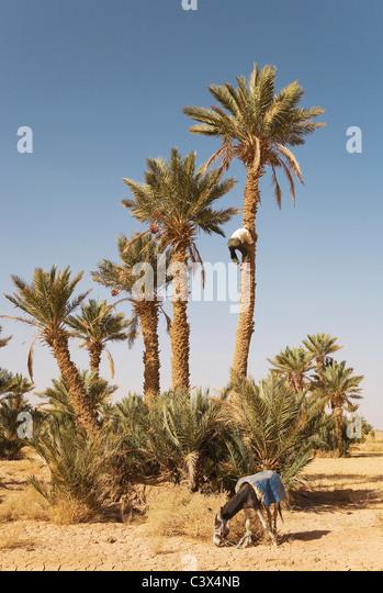 Dating in the high desert