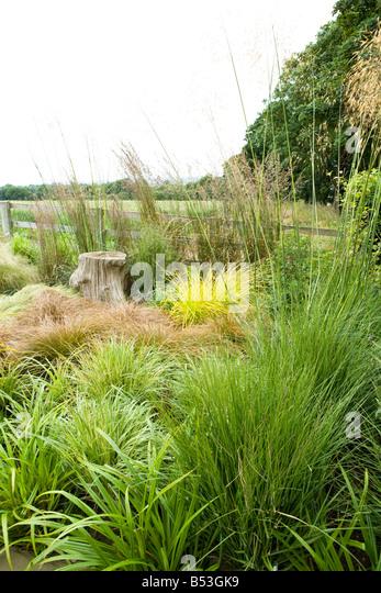 Carex Elata Stock Photos & Carex Elata Stock Images - Alamy