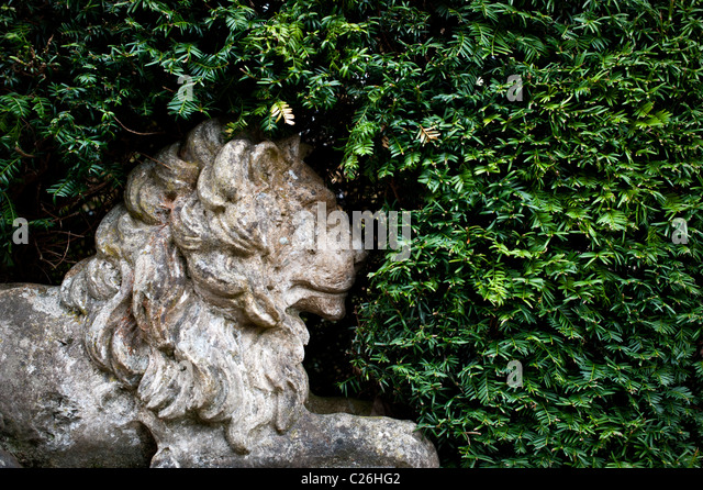 Stone Lion Statue In A Hedge. RHS Wisley Gardens   Stock Image