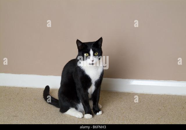 Portrait Ginger White Tom Cat Stock Photos & Portrait ...