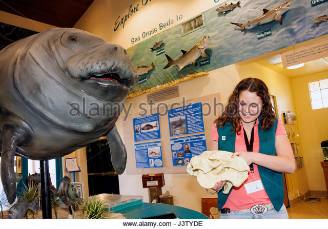 Florida Fort Ft Pierce Manatee Observation And Education Center Wildlife Sea Cow Endangered Specie