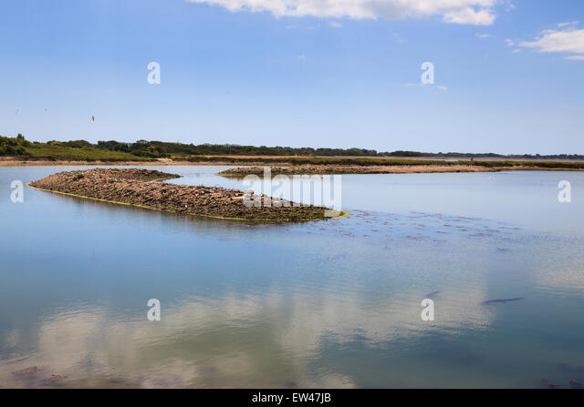 Hayling Island Oyster Beds