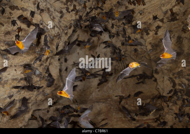 Man Caves Dove Valley : Afer stock photos images alamy
