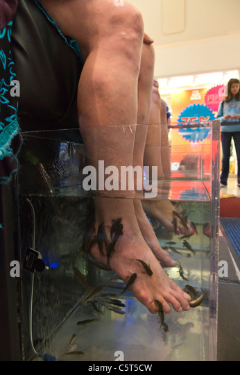 Nibble fish stock photos nibble fish stock images alamy for Fish pedicure near me
