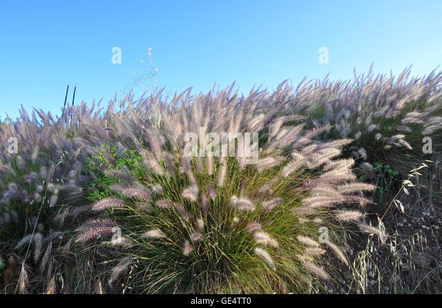 Australia meadow stock photos australia meadow stock for Wild ornamental grasses