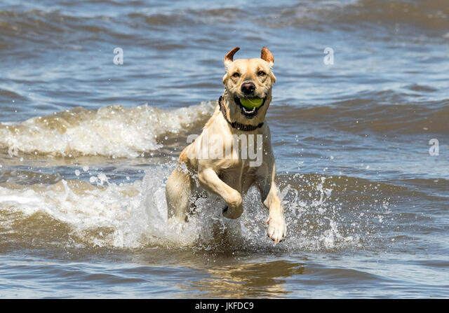 Good Walks With Dogs Sunshine Coast