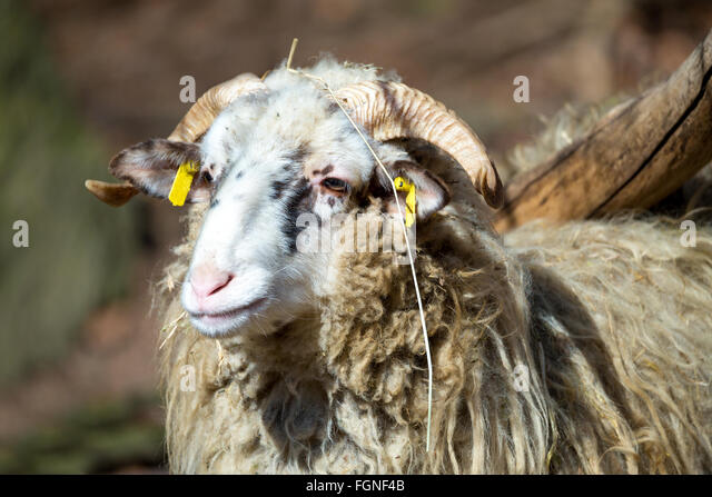 sheep ranch buddhist single men Women maintained ranch homes, raised children  her perception of patagonia probably represented the mindset of women living there, .